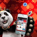 What Do We Need to Know About Royal Panda?